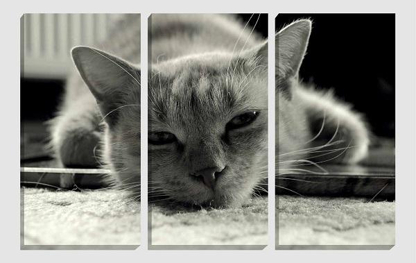 fotoquadro gatto in tre parti