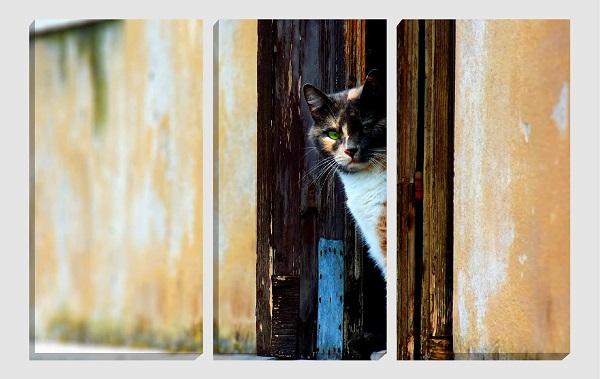 fotoquadro gatto suddivisa in tre parti di unico soggetto