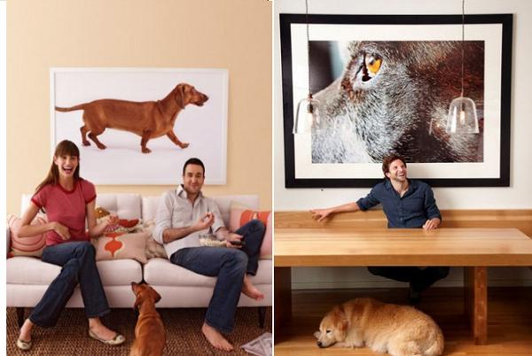 pet teraphy esempi foto in salotto