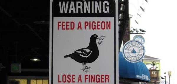 Cartelli stradali di pericolo: non date da mangiare ai piccioni