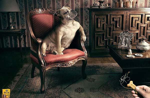 cane in poltrona