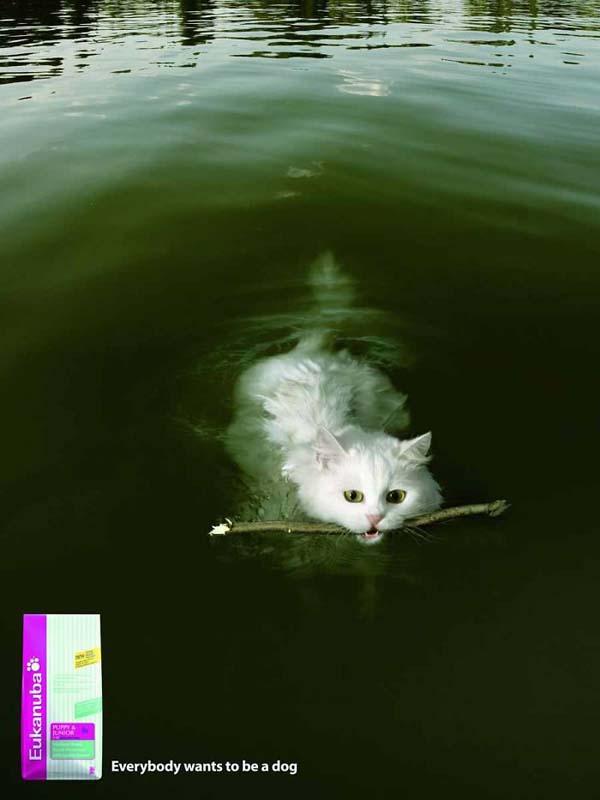 gatto riporta bastone come il cane