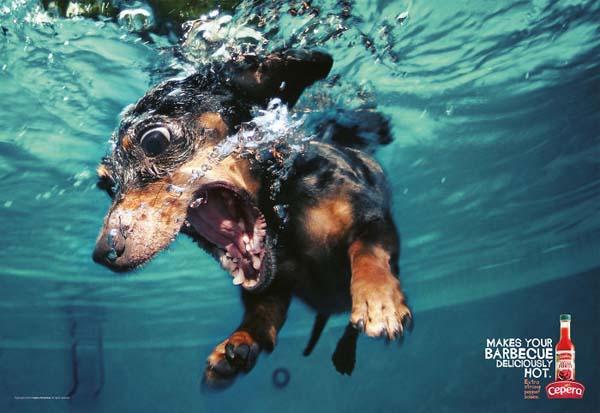 cane tuffato in piscina