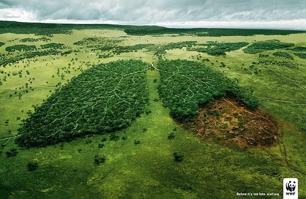 campagna wwf contro la deforestazione