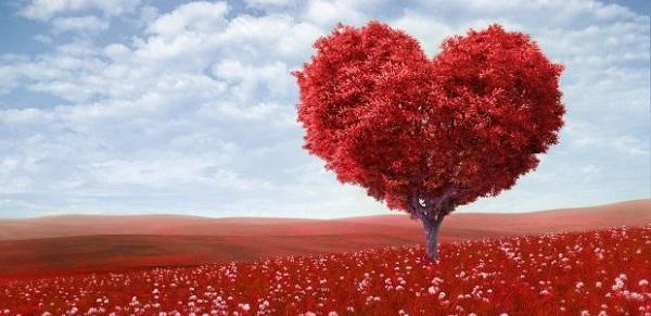 san valentino albero cuore