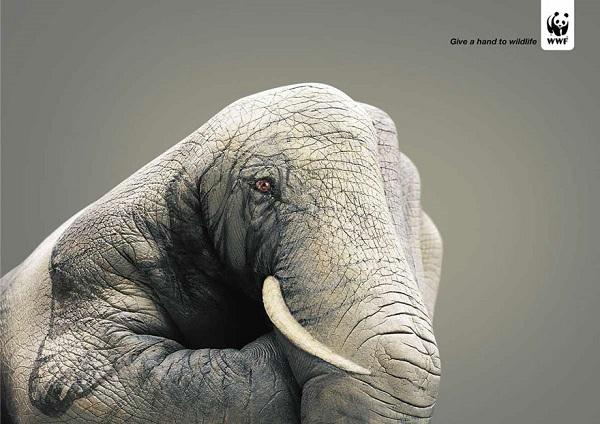 dai una mano agli animali