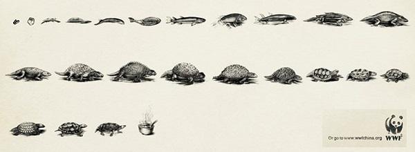 evoluzione tartaruga WWF
