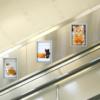 cats_battersea_glimpse