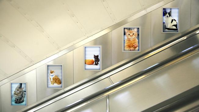 La migliore ragione per mettere i gatti in ogni spazio for Migliore lettiera per gatti